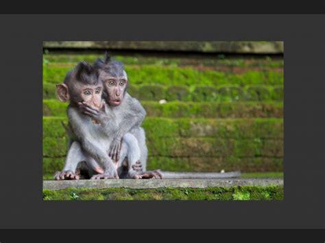 imagenes animales asombrosos ranking de animales asombrosos 2 listas en 20minutos es