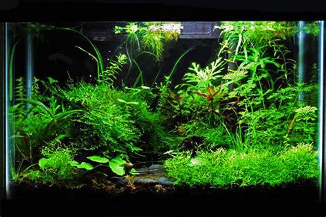 Aquascape Plants List by Fish Aquarium Garden Of The Month September 2009