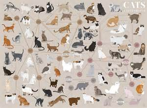 types of cats new pop chart lab poster cat egorizes your favorite
