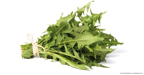 What Are Dandelion Greens Good For?   Mercola.com