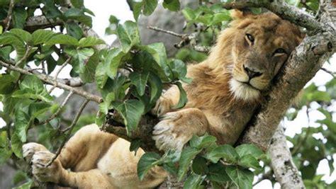 Queen Elizabeth National Park Uganda Wildlife   the richness of wildlife in queen elizabeth national park