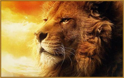 leones imagenes grandes imagenes para fondo de pantalla de leones muy llamativos