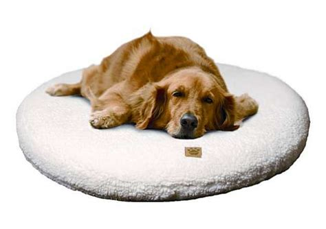 inflatable dog bed creature comfort claw proof inflatable dog bed sfgate