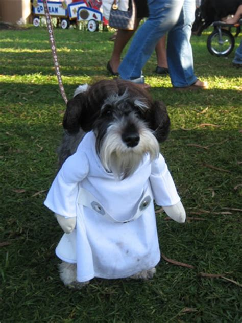 pug princess leia check out these awesome costumes puppy in