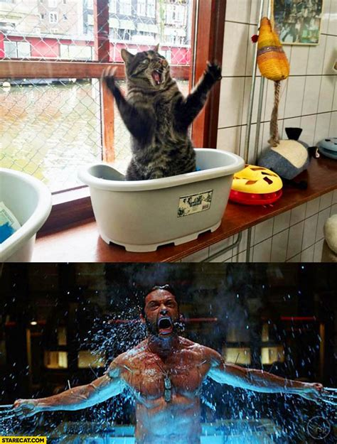cats  captions starecatcom page