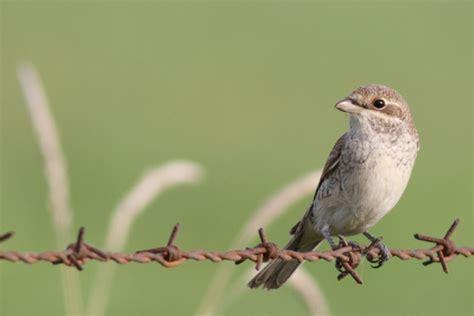 ptaki mniejsze  wieksiejsze stycznia