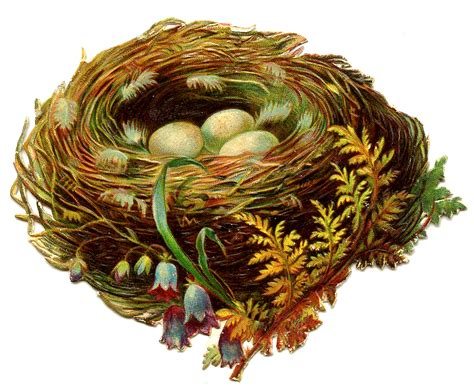 vintage graphic pretty nest  eggs   graphics