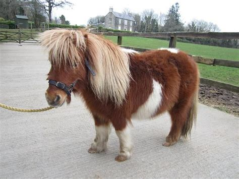Minie Setelan by Request We Need A On A Mini Pony With Putin