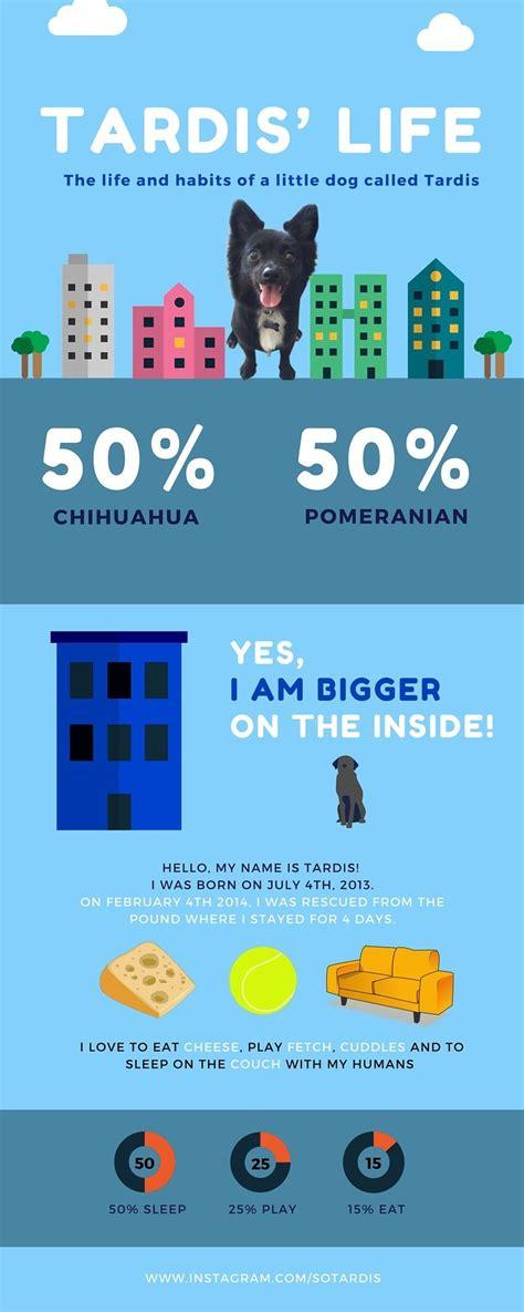 membuat infografis online membuat infografis menarik dengan tool berikut ini