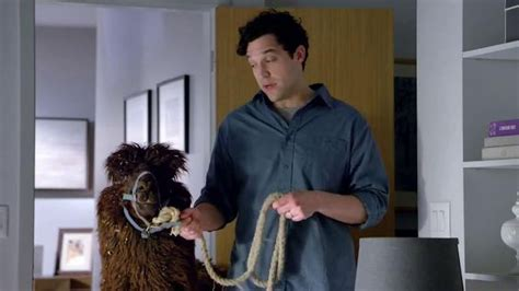 icomfort commercial actress serta icomfort tv commercial alpaca ispot tv