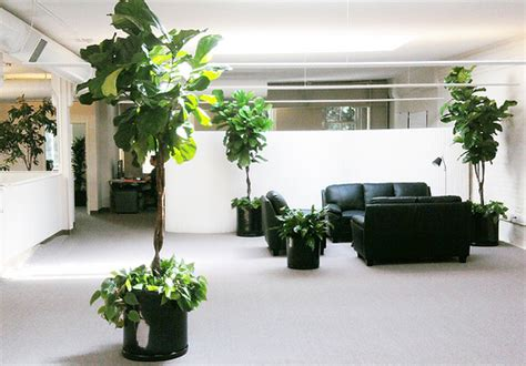 plants for office san francisco office plants service flickr photo sharing