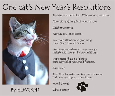 new year cat images new year s cat resolutions 3