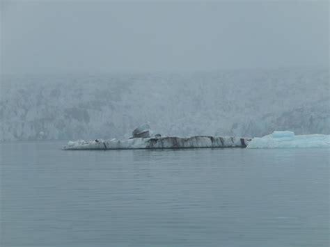 zodiac boat kuwait ice lagoon zodiac boat tours hofn iceland top tips