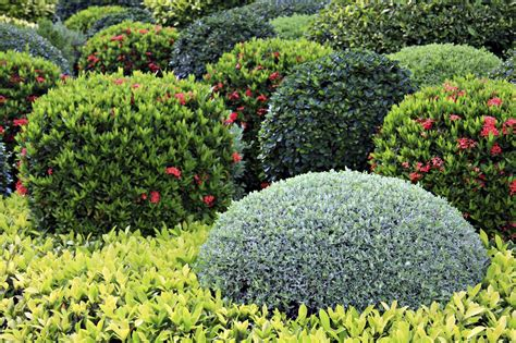 landscaping bushes learn about landscaping shrubs and their uses