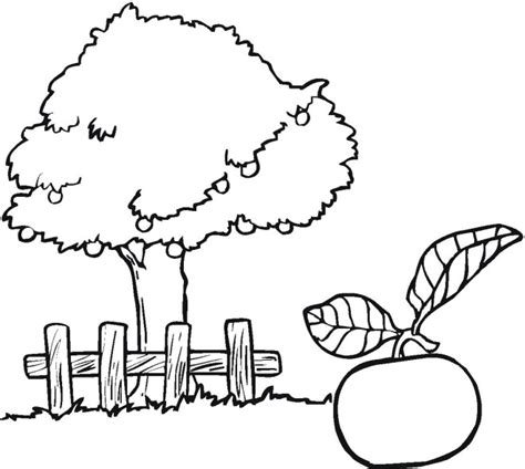 coloring page of a apple tree apple tree coloring page