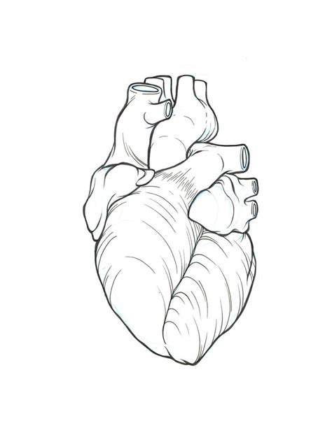 realistic heart coloring page 17 best ideas about real heart tattoos on pinterest