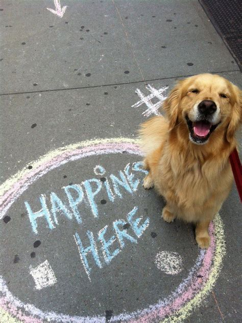 how much golden retriever in philippines 319 best images on smile joie de vivre and feelings