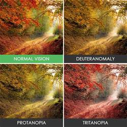 different types of color blindness different types color blindness photos 10 whoatastic