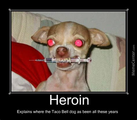 Heroin Meme - heroin taco bell dog by jcris25 meme center