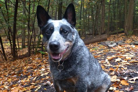 lost dogs of how to trace dead end microchips and tag information on found pets lost dogs illinois