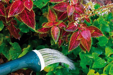 innaffiare fiori vacanza come innaffiare le piante quando sei in vacanza gesal it
