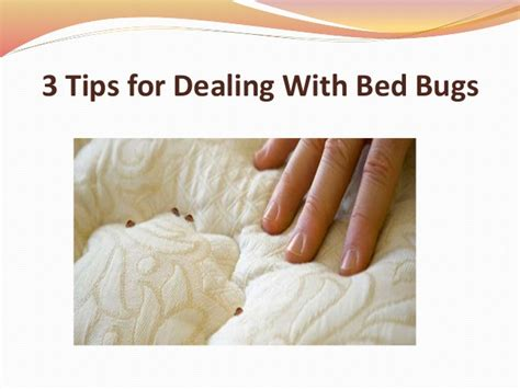 how to deal with bed bugs how to deal with bed bugs 3 tips for dealing with bed bugs