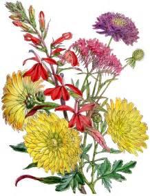 fall flower clip art viewing gallery