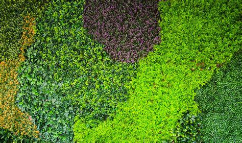 precios de plantas para jardin jardines verticales huichol las mejores plantas