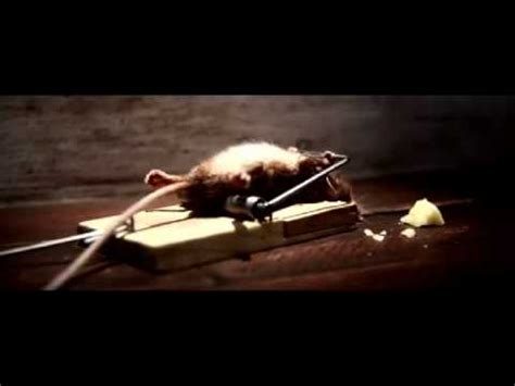 eye of the tiger mouse commercial mouse vs mouse trap youtube