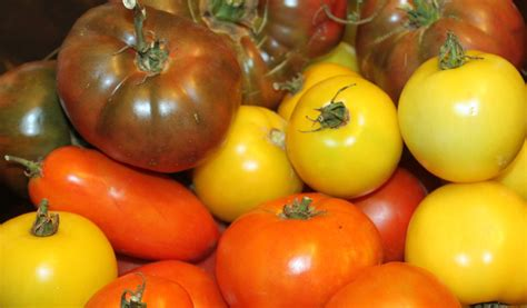backyard tomatoes 5 heirloom tomatoes to grow in your backyard this year