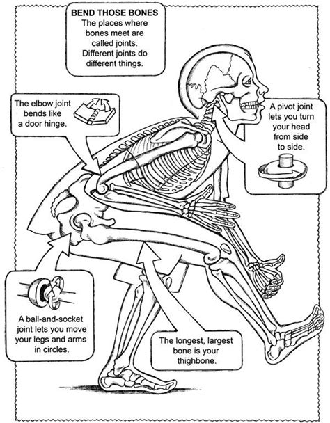 anatomy coloring pages muscles free free coloring page from dover publications pinky s