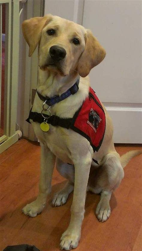 a service for autism autism service dogs are heroes dogs heroes service dogs and pets