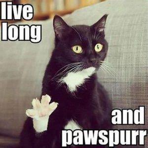 Birthday Cat Memes - grumpy cat happy birthday meme happy birthday memes