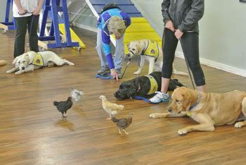 learn to service dogs 6 things you learn and owning service dogs