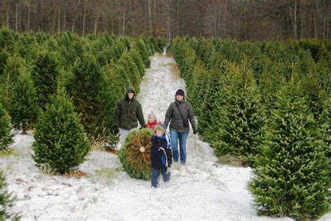 connect farm fresh christmas trees grown in ny state