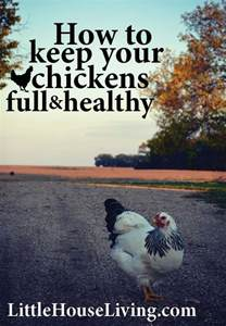 How To Keep Chickens In Your Backyard by How To Keep Your Chickens And Healthy Diet