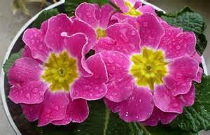 scenery pictures fleurs de printemps noms