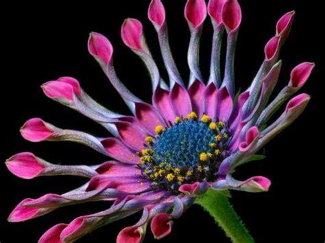 fiori tropicali fiori tropicali sfondo desktop 10119