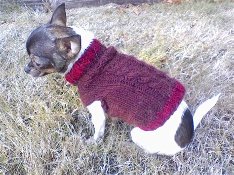 Cable Chihuahua Sweater Autumnblossomknits