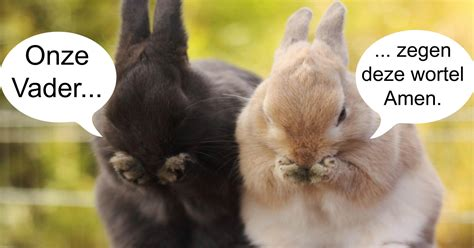 film quiz einde deze 10 konijntjes doen even het onze vader voor