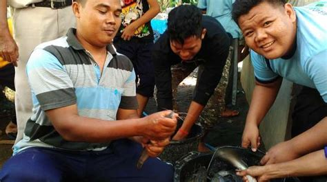 Pakan Lele Yogyakarta anak panti asuhan di bantul merintis usaha ternak lele bisnis suara