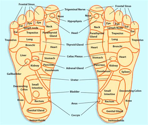 pressure points foot pressure points on foot diagram foot reflexology and