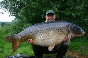 Carp record goes at acton burnell coarse fisheries news angling