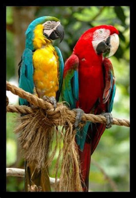 Tempat Makan Burung Kakak Tua fakta rahsia alam bahagian 7 seribupilihan