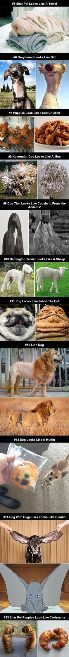 puppies that look like fried chicken 1000 images about on shakespeare so and funnies