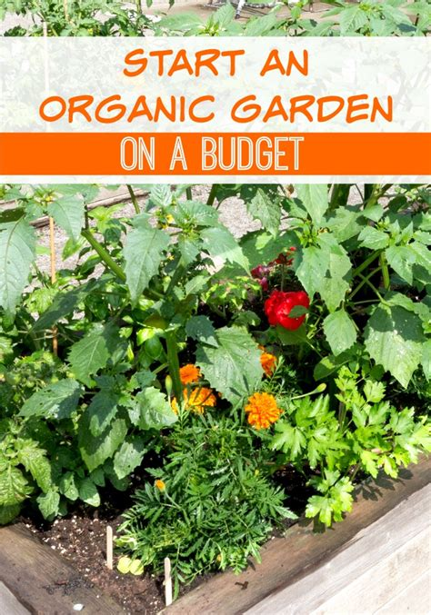 Gardening On A Budget Start An Organic Garden On A Budget Kristi Trimmer