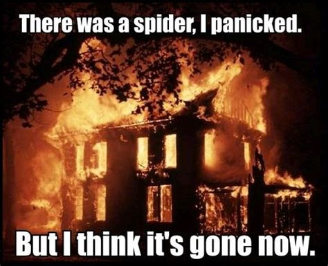 I Saw A Spider Meme - do you panic when you see a spider answerit