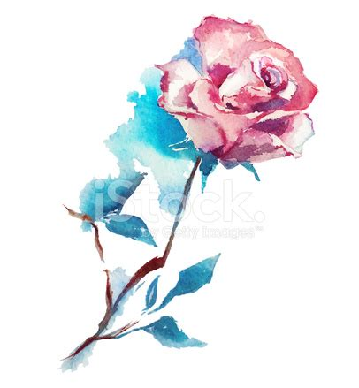 rose watercolor vector stock photos freeimages.com