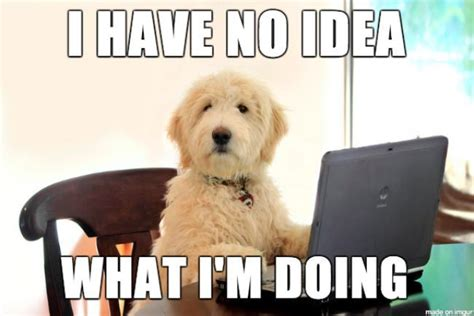 Know Your Meme Dog - the 9 dog memes every respectable dog person should know