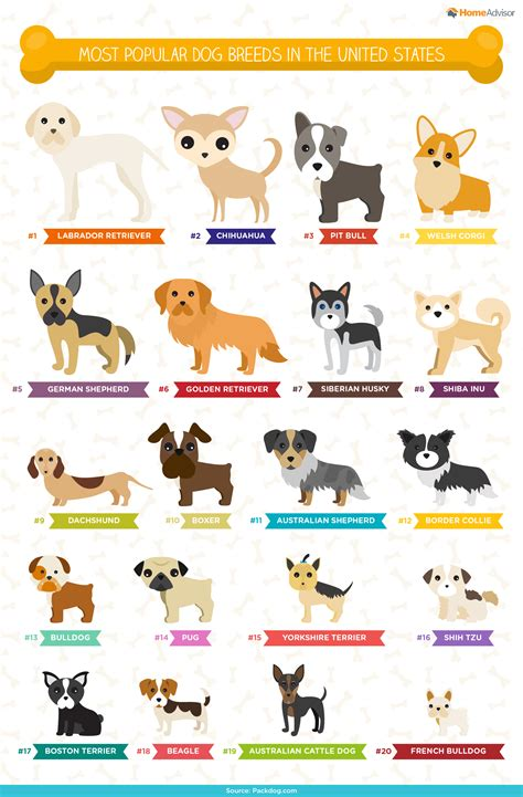 country puppy names the ultimate list of popular names breeds infographic by homeadvisor